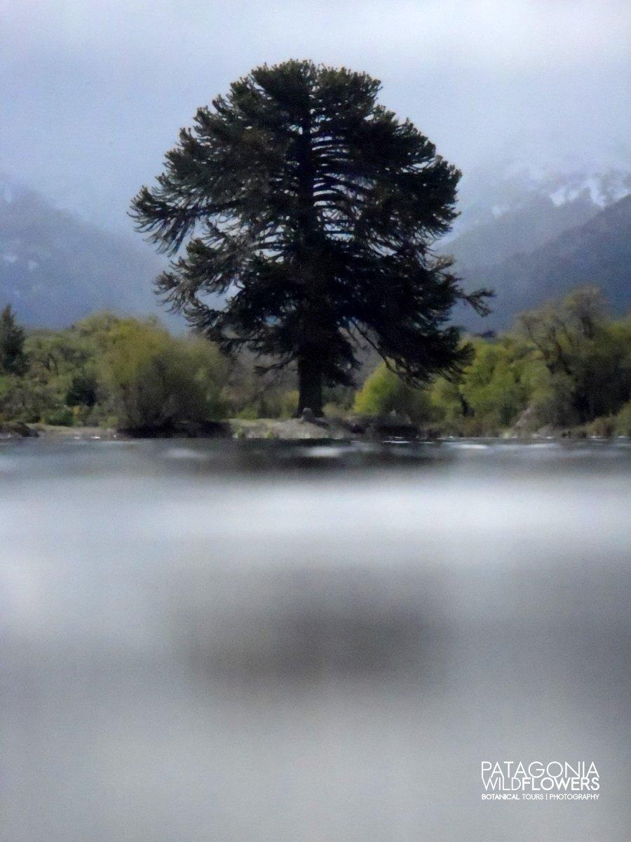 north-patagonia-rivers-spring